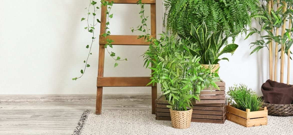 How To Incorporate Plants Into Your Interior Design