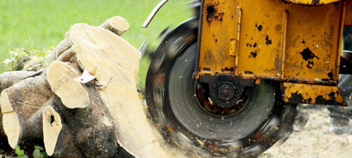 Top 4 Essential Tools for Clearing Overgrown Land