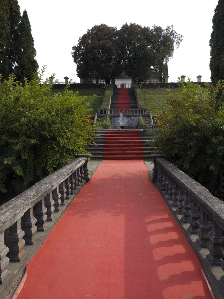 Achieve a Red Carpet Look
